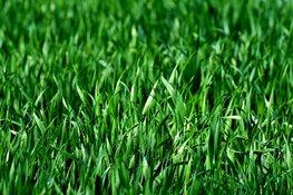 Wat vindt u van het openbare groen?